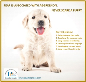 Never Scare a Puppy