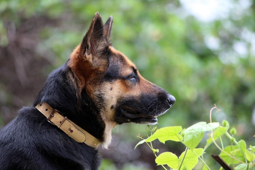 dog-723652_1280